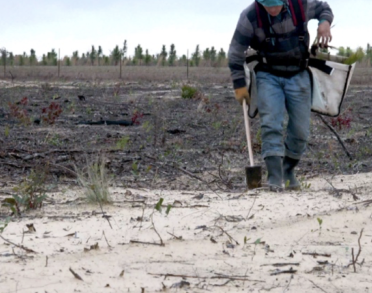 Eastman and GP Cellulose provide critical support for longleaf pine restoration in Florida